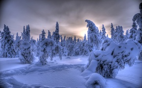 Picture Ylläs, snow, winter, trees, Lapland, Finland, Akaslompolo, Finland, Ylläs, Äkäslompolo, Lapland, forest
