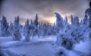 Picture winter, forest, snow, trees, Finland, Finland, Lapland, Lapland, Ylläs, Äkäslompolo, Akaslompolo, Ylläs
