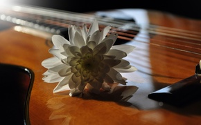 Picture flower, music, guitar