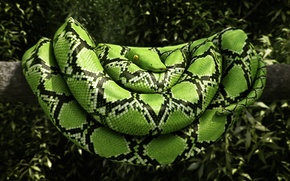 Picture leaves, tree, snake, green, render, reptile