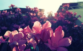 Picture summer, the sun, flowers