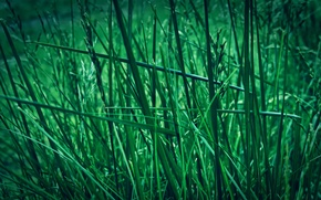 Picture greens, grass, nature, Zeleny