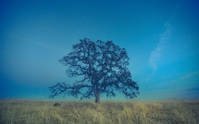 Picture field, the sky, grass, tree