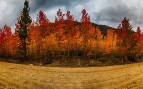Picture road, autumn, the sky, trees, road, trees, Autumn