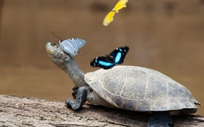 Wallpaper paws, butterfly, turtle, neck