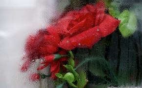 Wallpaper glass, flowers, background