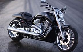 Picture Harley, Motorcycle, Harley-Davidson, V-rod