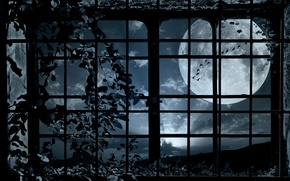 Picture birds, night, the moon, plant, pack, window, grille, bindweed