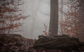 Picture autumn, forest, fog, forest, nature, Autumn, fog