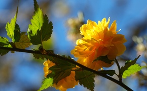 Picture flower, leaves, yellow, tree, branch, spring, petals