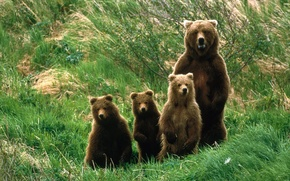 Picture nature, family, bears