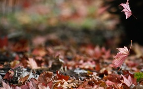 Wallpaper autumn, nature, foliage, web