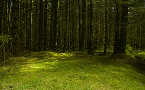 Picture forest, summer, glade