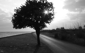 Picture road, Tree, Black and white
