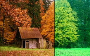 Picture Autumn, Forest, Summer