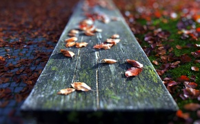 Picture leaves, macro, bench
