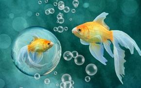 Wallpaper fish, art, reflection, bubble, goldfish
