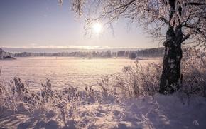 Picture winter, the sun, snow, nature