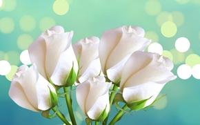 Picture roses, bouquet, petals, Blik