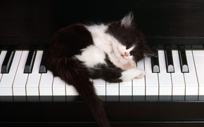 Wallpaper keys, sleeping, Kitty, piano