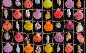 Picture colored, rope, cells, shell, sea