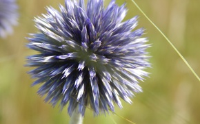 Picture grass, flowers, focus, blue