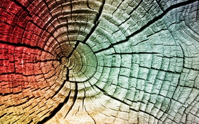 Picture old, tree, color, crack, the end