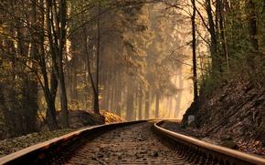 Picture trees, landscape, nature, rails, slope, trees, landscape, nature, slope, rails