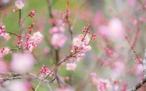 Picture flowers, branches, spring, garden