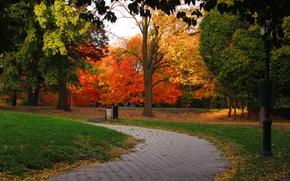 Picture Autumn, Park, Fall, Track, Park, Autumn, Colors, Trees