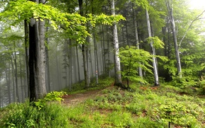 Picture summer, trees, forest, landscape, nature