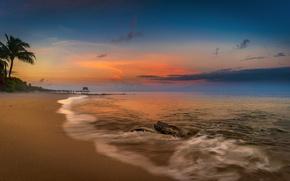 Picture sea, beach, sunset, palm trees, coast