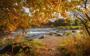 Picture autumn, leaves, branches, stones, for, yellow, river