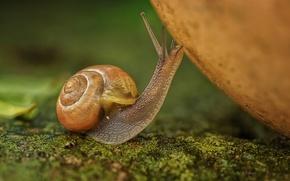 Picture macro, snail, bokeh