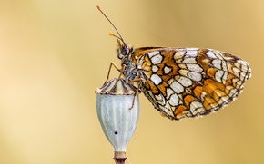 Picture eyes, butterfly, wing, button, antennae, butterfly, button, eye, wing, antennae