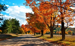 Wallpaper the colors of autumn, road, trees, autumn, forest