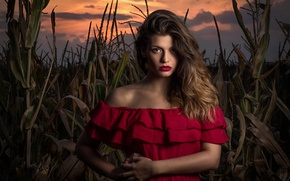 Picture field, look, girl, sunset, the evening, makeup