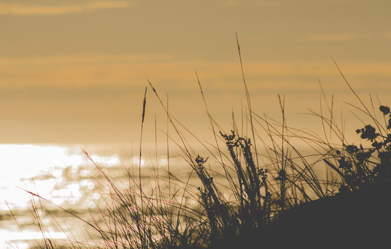 Photo wallpaper summer, grass, sea, ocean, sunny