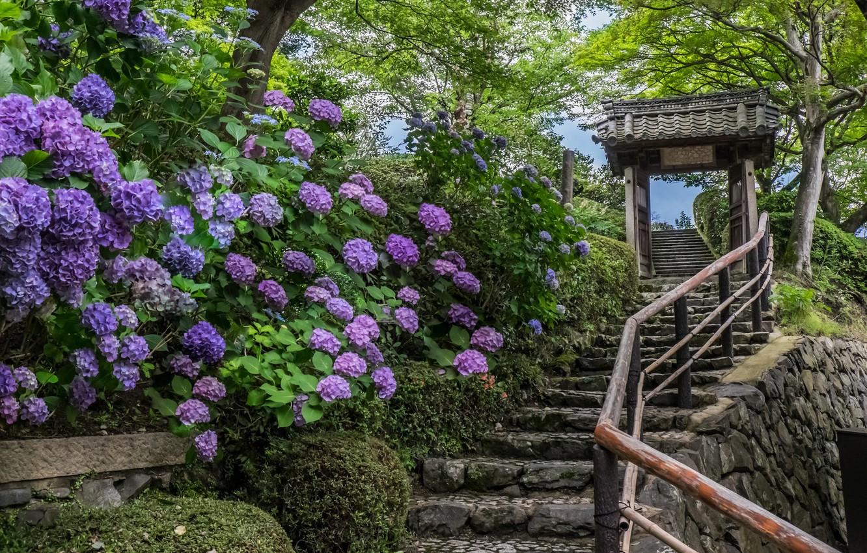 Photo wallpaper flowers, Japan, ladder, temple, Japan, Kyoto, Kyoto, hydrangeas, Yoshimine-dera Temple