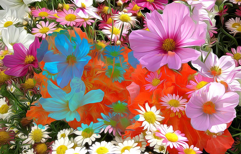 Photo wallpaper line, flowers, abstraction, paint, petals, Daisy, kosmeya
