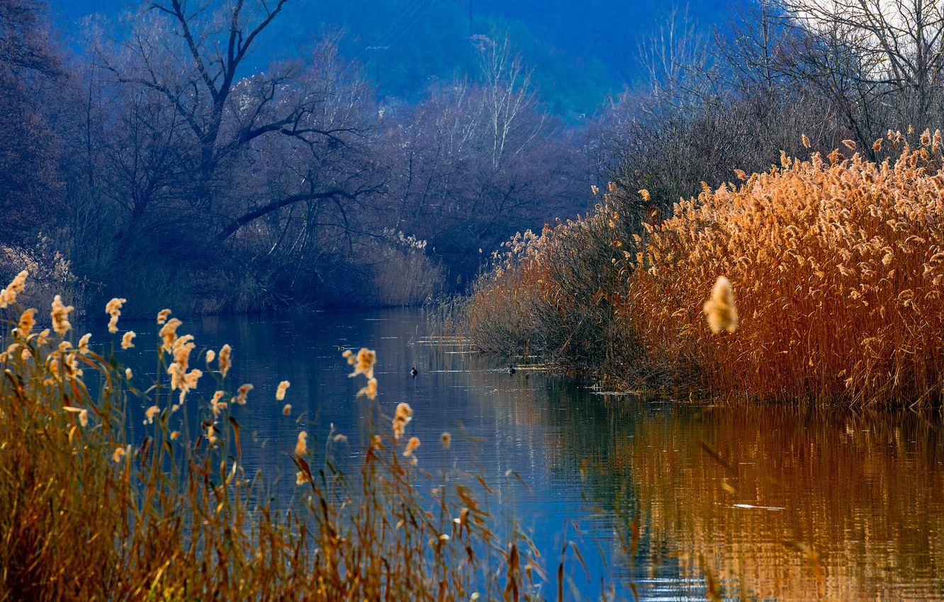 Photo wallpaper forest, mountains, lake, duck, reed