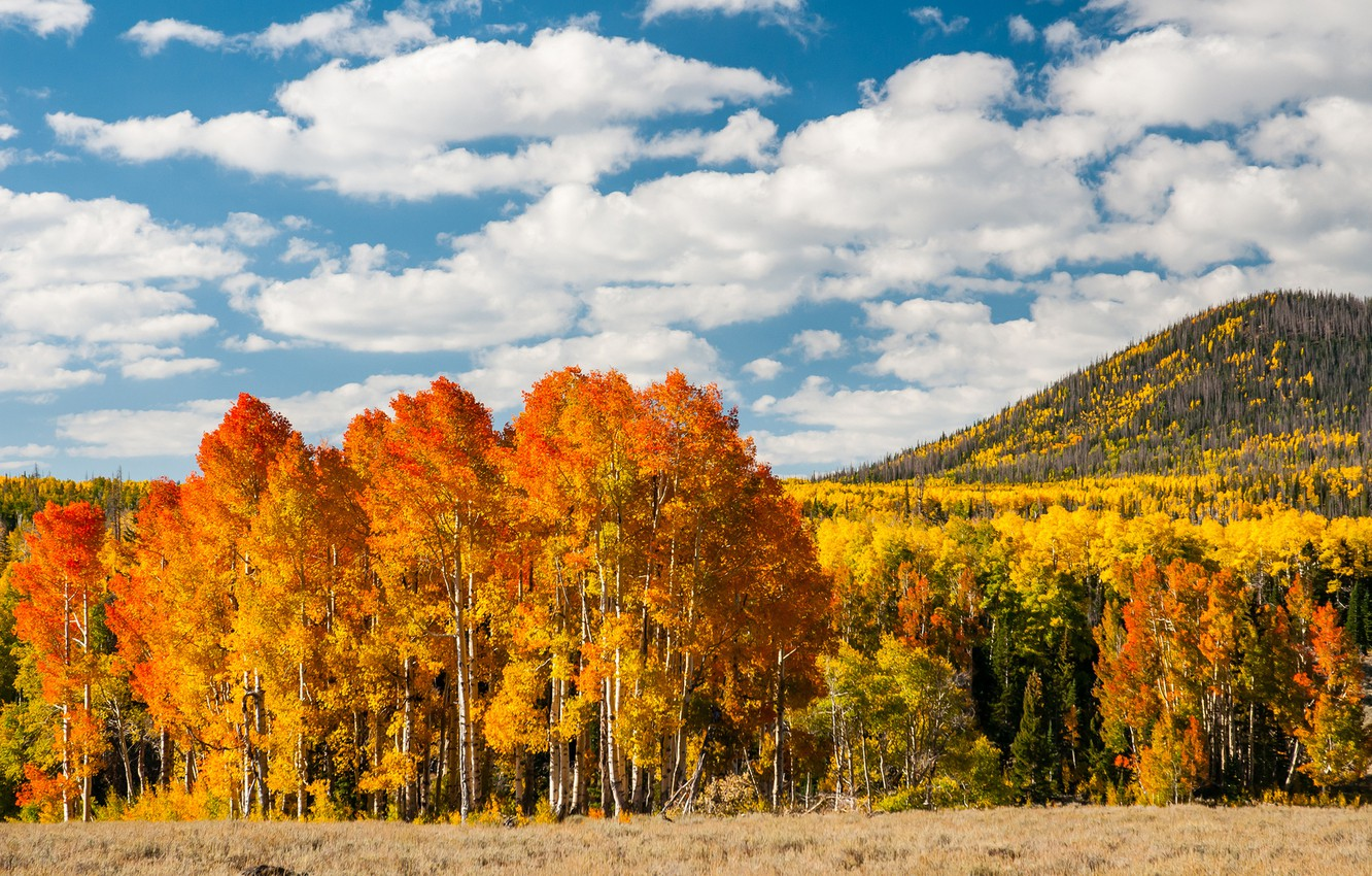 Photo wallpaper autumn, forest, leaves, trees, yellow, hill