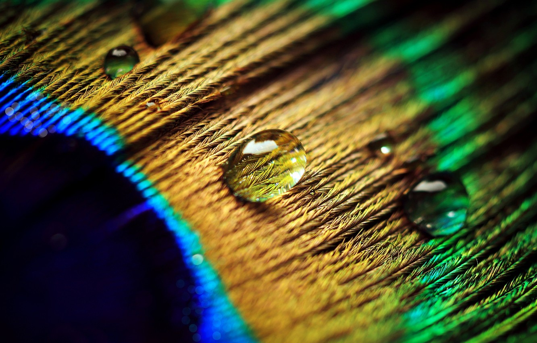 Photo wallpaper water, drops, macro, pen, peacock