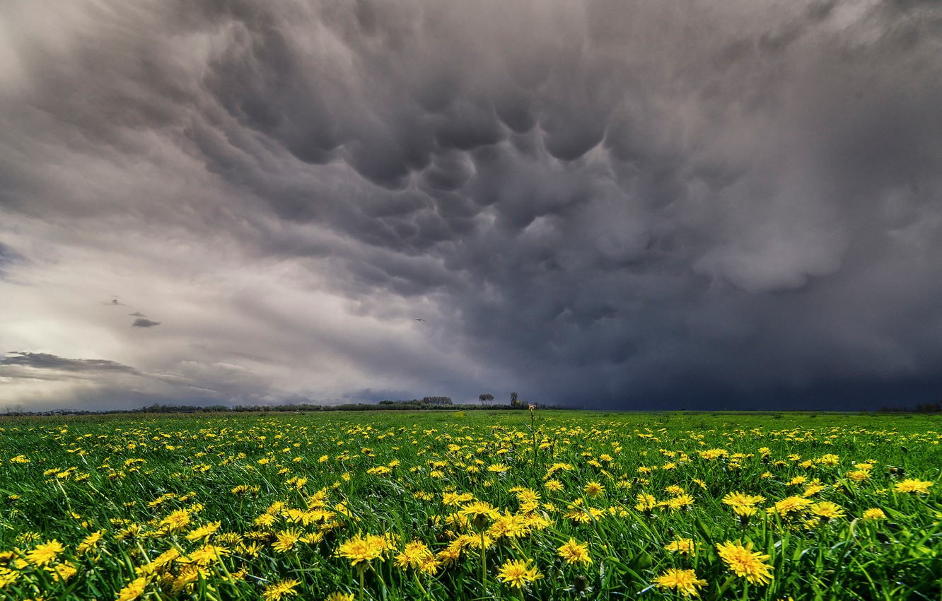 Photo wallpaper field, the sky, flowers, Spring, yellow, meadow, May, dandelions, meadows, videobritney clouds