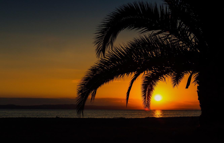 Photo wallpaper sea, summer, sunset, palm trees, beauty