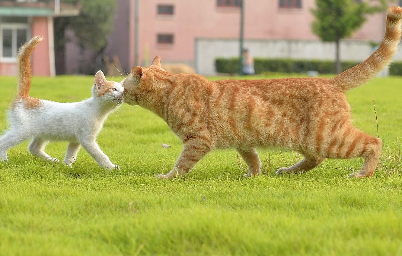 Photo wallpaper cat, grass, meeting, kitty