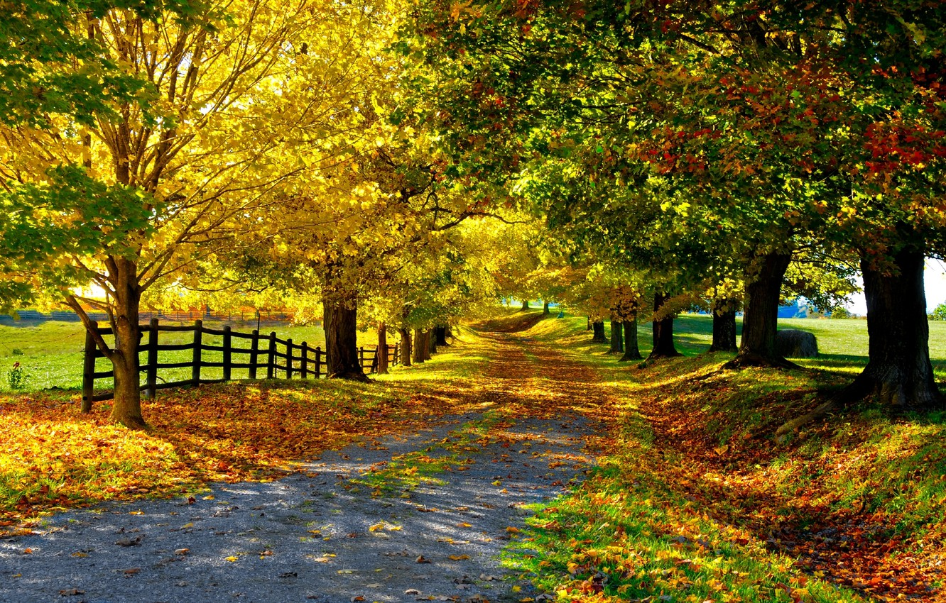 Photo wallpaper road, autumn, leaves, trees, the fence, Nature, alley