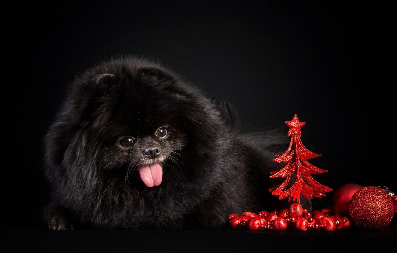 Photo wallpaper background, new year, ball, dog, tree