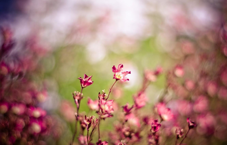 Photo wallpaper field, macro, flowers, nature, the wind, pink