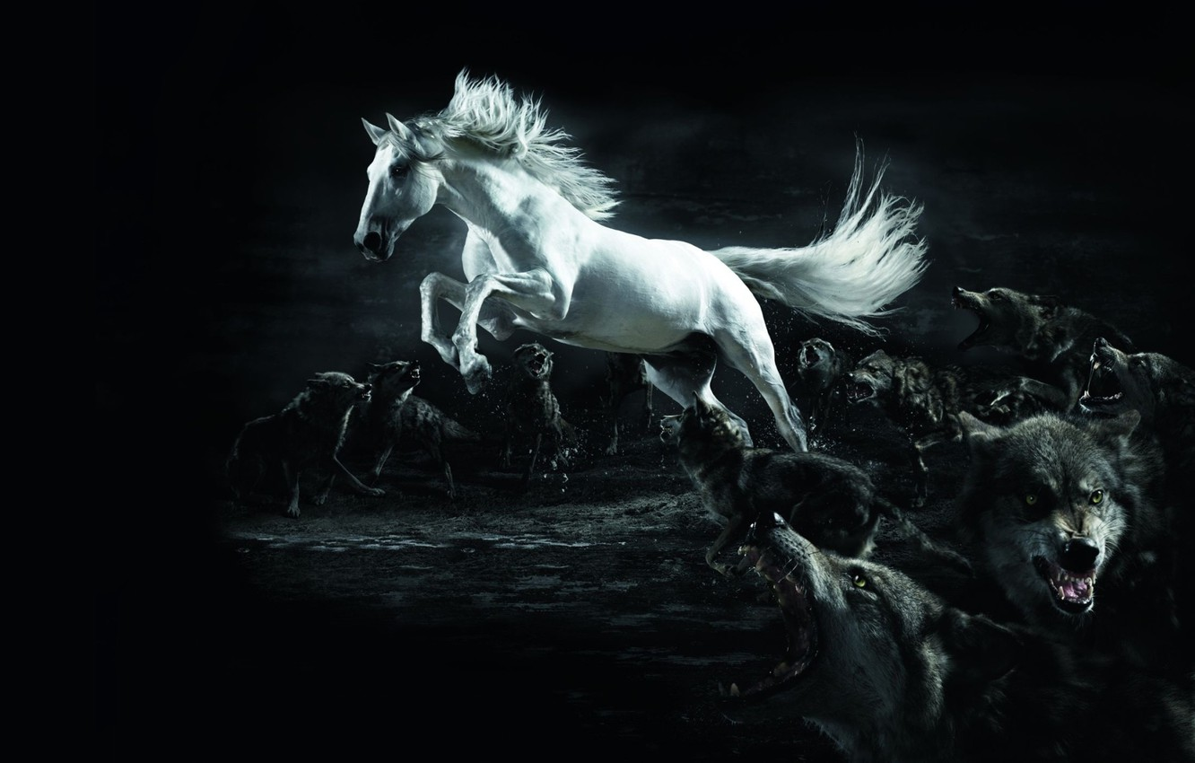 Wallpaper White Horse Wolves Twilight Wolf Horse Images